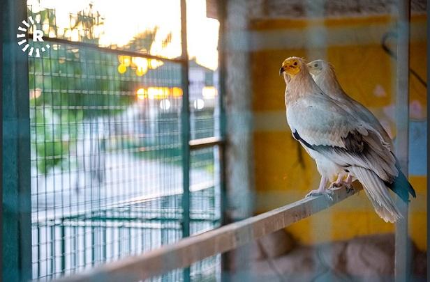 أربيل.. افتتاح أكبر حديقة حيوانات على مستوى العراق       Balindaa